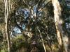 burra-creek-gorge-trees.png
